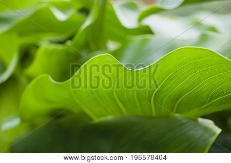 Detail Close Up Of Green Leaf
