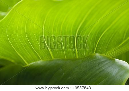 Detail close up of abstract shape of a green leaf