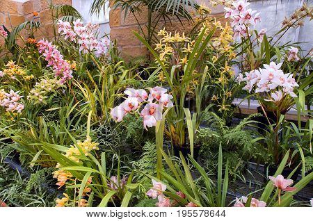 View Of Pink Orchids