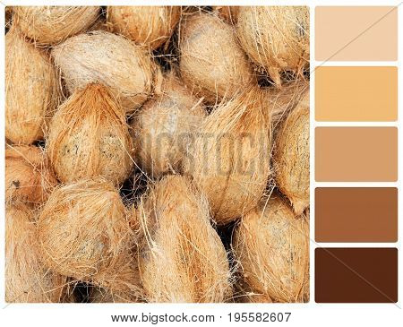 Coconut Texture With Palette Color Swatches