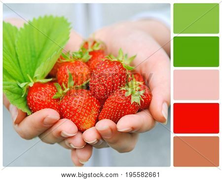 Hands Holding Fresh Strawberries With Palette Color Swatches