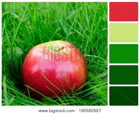 Red apple in grass. Colour palette with complimentary colour swatches