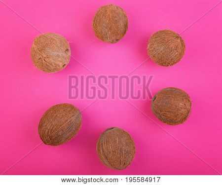 A lot of exotic and tropical coconuts on a bright pink background. Many coconuts folded into a circle on a pink background. Exotic tropical nuts. Whole coconuts. Top view of tropical fruit coconuts.