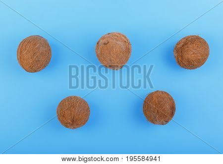 Close-up of whole and exotic coconuts on a bright blue background. Nutritious vegan diet. Exotic tropical nuts. Natural, organic whole coconuts on a blue background. Five fresh cocos.