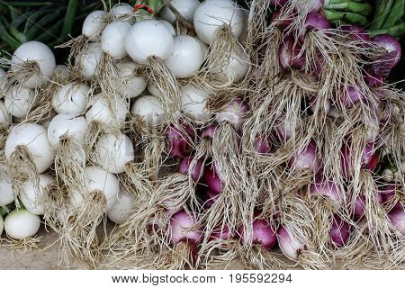 Young white and red onions from farmers market
