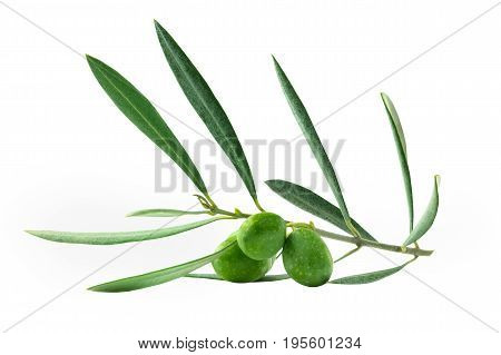 A photo of a vibrant green olive branch with berries, isolated on white