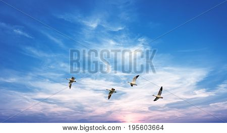 Flock of Geese over bright sky Environmental Conservation concept