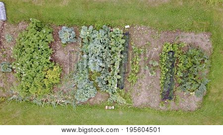 Aerial photo over home grown garden vegetable patch
