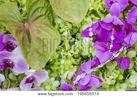 Beautiful orchid flower The Orchid are well known for the many structural variations in their flowers.
