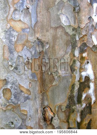 The old Surface of tree in the forest