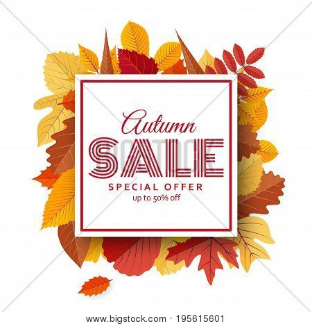 Autumn sale background template with bright leaves. Vector illustration