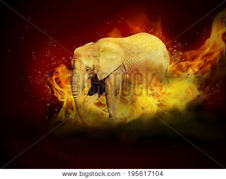 Photo manipulation of elephant in fire flames