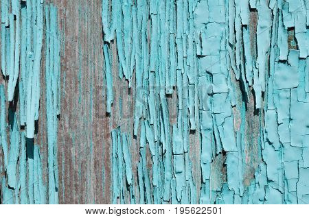Texture wallpaper bright blue paint peeling from the wood
