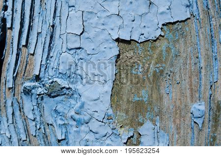Texture blue paint peeled off the wood