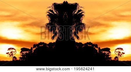 Landscape with palm trees and evening sky at sunset