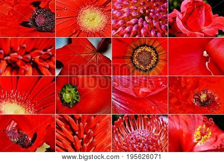 Close up of different red blossoms in sunlight
