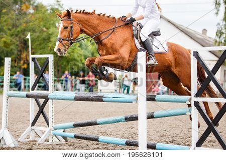 Sorrel horse with rider jumping over obstacle on show jumping competition