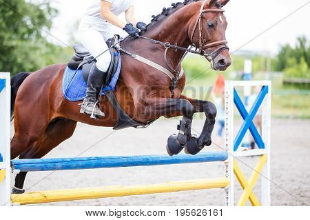 Bay horse with rider jumping over obstacle on show jumping competition