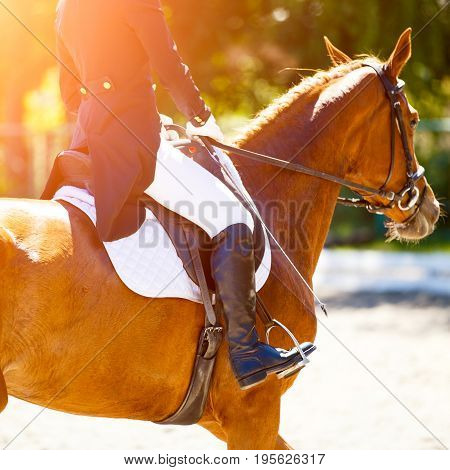 Close up image of sorrel horse with rider at dressage equestrian sports competitions. Details of equestrian equipment