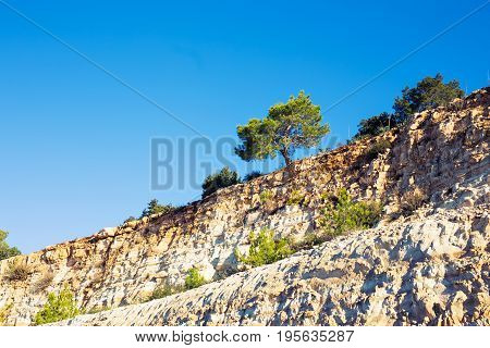 Lonely tree growing on top of the rock