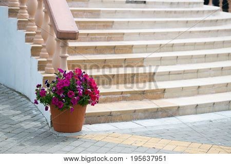 Marble staircase with railing and flower garden