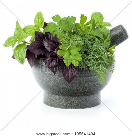 Fresh spices and herbs in stone mortar isolated on white background cutout. Sweet basil, red basil leaves, dill and parsley.