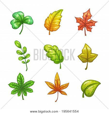 Cartoon colorful vector leaves set, isolated icons on white background. Autumn floral collection.