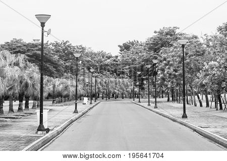 View of empty road flanked with street lamp and green natural background. (Black and White filter effect)