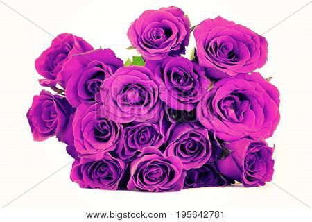 Fantasy purple roses bouquet on white background. vintage style.