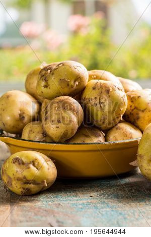 New Harvest, Fresh Potatoes, Ready To Cook
