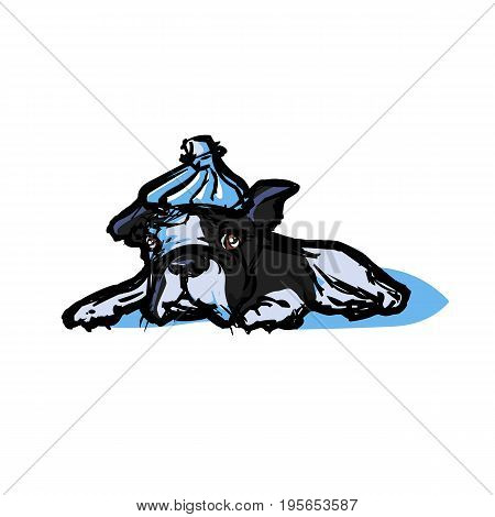 Sad sick boston terrier with a hot-water bottle on the head in the style of colored doodle