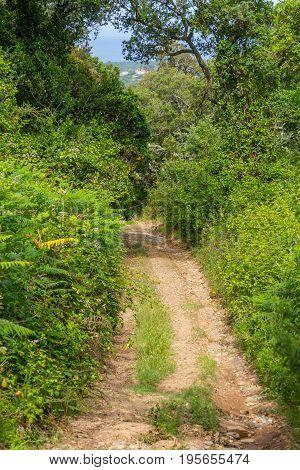 Dirty Forest trail in Cercal Alentejo Portugal