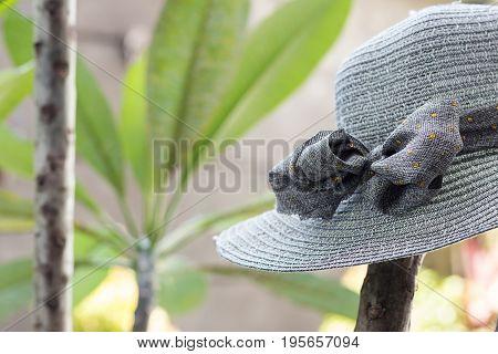 Straw hat hanging on a plumeria frangipani tree, tropical Bali island.