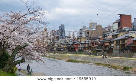 Kyoto, Japan - May 2017 : Activities along Kamo riverbank with cherry blossom trees in Kyoto, Japan on May 2017