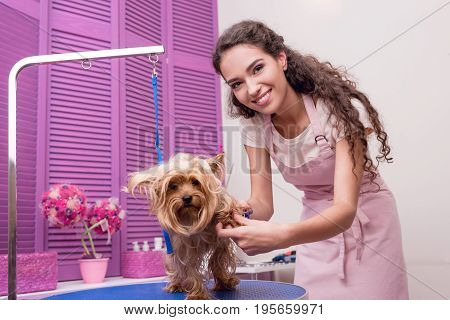 Smiling Young Professional Groomer Grooming Yorkshire Terrier In Pet Salon