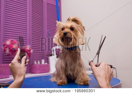 Cropped Shot Of Groomer Holding Scissors And Comb While Grooming Dog In Pet Salon