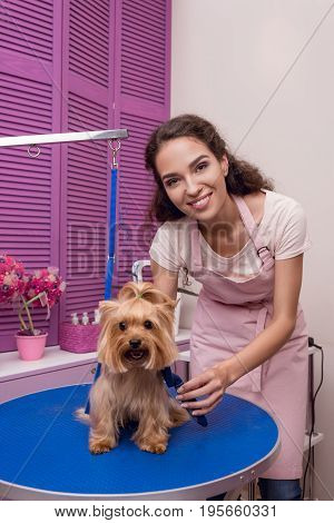 Smiling Professional Groomer Holding Comb While Grooming Dog In Pet Salon