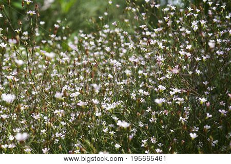 Summer wildflowers and grass in the sunlight