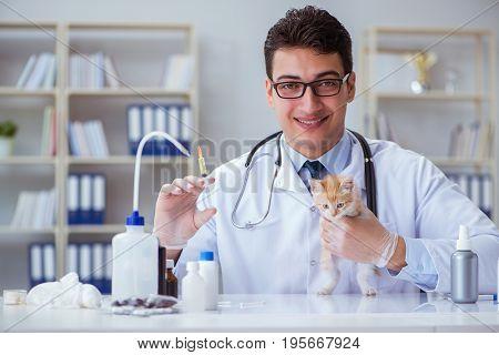 Cat visiting vet for regular checkup