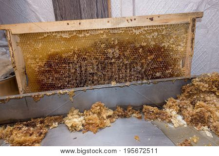 Container for opening cells. Released empty honeycomb.