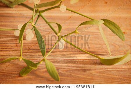 Green Mistletoe Close Up.