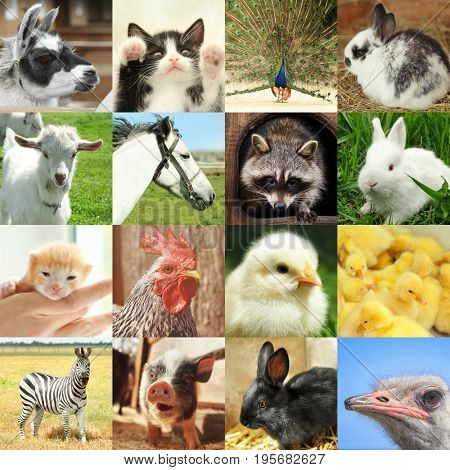 Collage with different cute animals