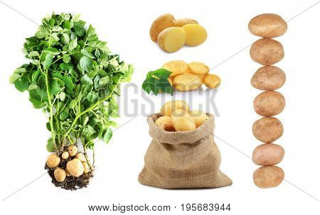 Collage of raw potatoes on white background