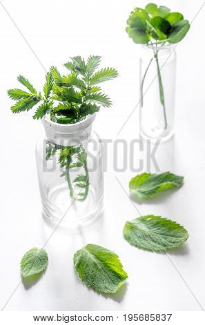 Homeopathy. Medicinal herbs in glass on white background.