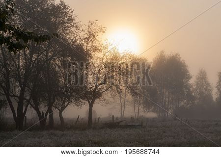 Old garden trees in misty morning with sun rising, Podlasie Region, Poland, Europe
