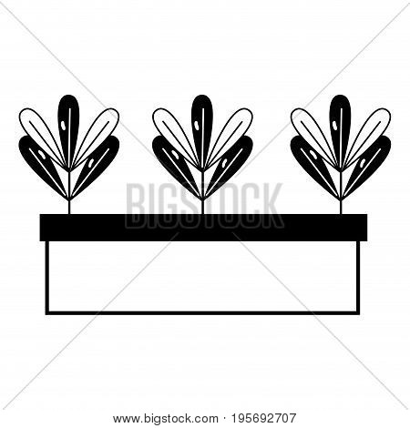 contour ecological plant with leaves inside flowerpot vector illustration