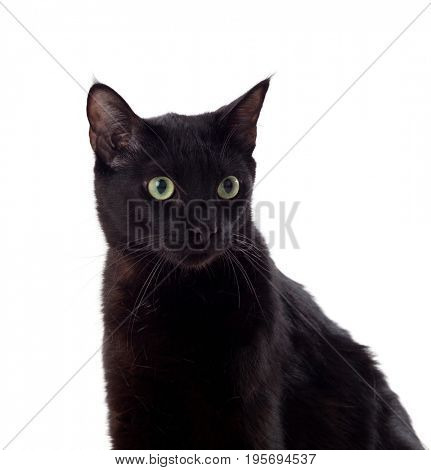 Black cat with yellow eyes isolated on a whit background