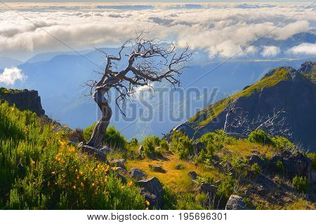 Lonely Tree. View Of Mountains On The Route Pico Ruivo - Encumeada, Madeira Island, Portugal, Europe