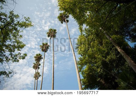 Palm trees against blue sky, low angle view