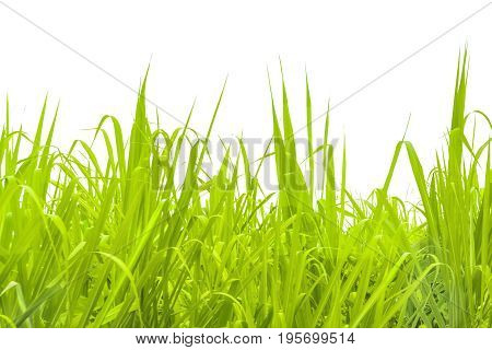 Grass Background Isolated Photo